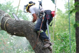 Tree Removal and Tree Felling